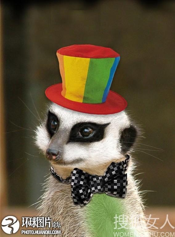 动物扮小丑 比人要可爱的多